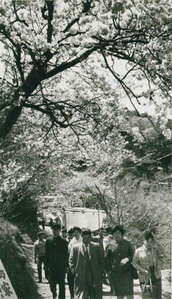 天神社から眉山へ上る途中の桜並木