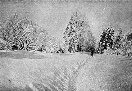 高田の雪景