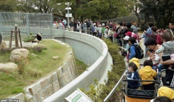 王子動物園(灘区)のパンダ舎