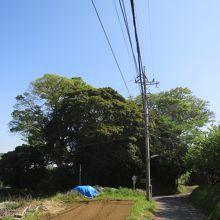 台谷戸稲荷社とタブの木